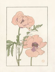 Jeannie Foord «Decorative Plant and Flower Studies: For the Use of Artists, Designers, Students and Others Illustration Botanique, Art Et Illustration, Floral Illustrations, Botanical Illustration, Fleurs Art Nouveau, Art Nouveau Flowers, Art Floral, Botanical Drawings, Botanical Prints