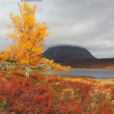Saana, Tsahkaljärvi, Lappi Enontekiö Kilpisjärvi Pohjoiskalotti