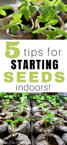 Starting seeds indoors can be tricky. Here are 5 tips to get the best results when starting your seeds indoors to get your garden off to the best start!