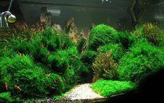 One of best shrimp tanks I've ever seen. Mosses! Mosses! Mosses!