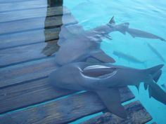 Sharks on the Deck
