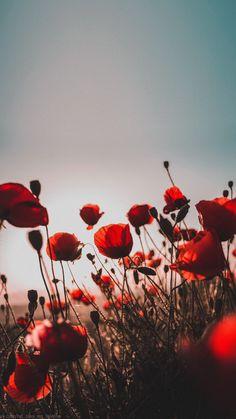 Poppy red sky sunset flower wallpaper for phone Flowers wallpapers phone iPhone wallpaper # screensa Flower Iphone Wallpaper, Red Wallpaper, Iphone Background Wallpaper, Aesthetic Iphone Wallpaper, Nature Wallpaper, Aesthetic Wallpapers, Sunset Wallpaper, Phone Backgrounds, Phone Wallpapers