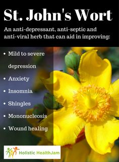 St. John�s Wort: Click to see health benefits, studies and side effects.