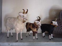 Puts sheep