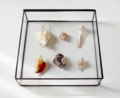 Glass Display Box Glass Jewelry Box Wedding by jacquiesummer