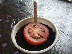 Como Plantar Tomate de (Forma Fácil ) Fiz e valeu a pena, também plantei pepino desta mesma forma ,,,assim não preciso mais comprar as mudas..