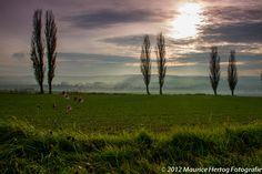 Mistige velden | Misty Fields  Uitzicht op de Eyser Plantage tussen Wittem en Eys en het Gulpdal.  Photo © Maurice Hertog Fotografie