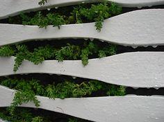 Succulent wall (Edina Tokodi)