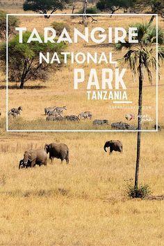 Tarangire National Park Safari Review tanzania