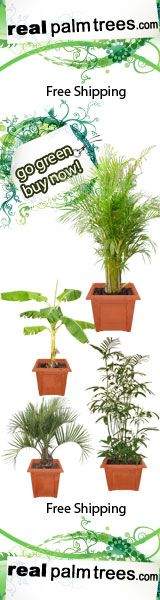 These Are A Few Of My Favorite Things Buy Indoor Plants, Indoor Palms, Indoor Trees, Patio Plants, Tree Interior, Interior Decorating, Homestead Florida, Wholesale Nursery, Buy Office