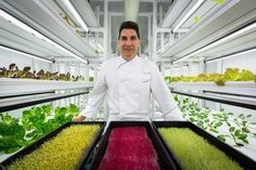 Hydroponic Gardening Ritz-Carlton gets greener with 'farm in a shipping container' - Naples Daily News Indoor Farming, Hydroponic Farming, Hydroponic Growing, Hydroponics System, Hydroponic Lettuce, Growing Tomatoes In Containers, Vertical Farming, Tomato Garden, Urban Farming