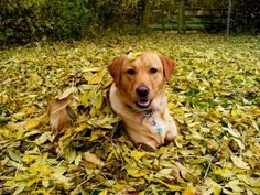 sallie plaing in the autunm leaves this year