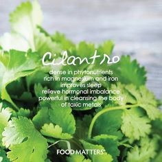 How do you use cilantro (aka coriander)?   We love adding it to a green juice!   www.foodmatters.tv