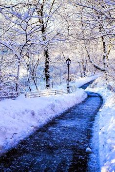Snowy Path - A Winter Dream