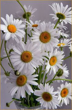 Daisies are the happiest flower don't you think?