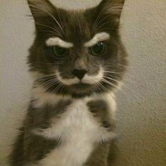 Hulusi Kentmen kedi olsaydi :)