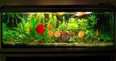 Фотогалерея - Клиентские аквариумы - пресноводные растительные