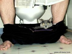 LOL......Only a cat:)   Humorous, Funny and Cute Animal Photos: Humor Page: Archive