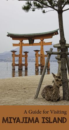 A guide to visiting Miyajima Island, Japan