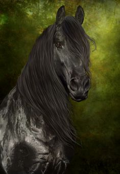 I used to assist in training Friesians....amazing animals.