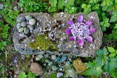 mano kellner, nature mandala Nature, Plants, Mandalas, Lawn And Garden, Naturaleza, Plant, Nature Illustration, Off Grid, Planets