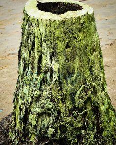 #tree #savenature #nature #naturelovers #trunks #trunk #beatifulnature #abstract #art #treeart #natureart #andaman #portblair #beach #coast #beachlife #nikon #nikonphotography #d3200 #picotheday #follow #follow4follow by siddhantrajmehta