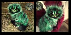 SOLD Pickles! Handmade Poseable Fantasy Cat! by Wood-Splitter-Lee on DeviantArt