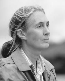 Jane Goodall; In July 1960, at the age of 26, Jane Goodall traveled from England to what is today Tanzania and bravely entered the little-known world of wild chimpanzees. She was equipped with nothing more than a notebook and a pair of binoculars. But with her unyielding patience and characteristic optimism, she won the trust of these initially shy creatures. She managed to open a window into their sometimes strange and often familiar-seeming lives. The public was fascinated and remains so to this day.