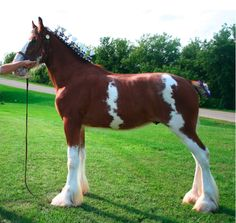 colorful pictures of draught horses | World Draft Horse Network : Draft Horse Classified Ads