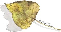Poplar Leaf. poplar grows the truffles