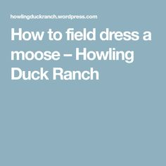 How to field dress a moose – Howling Duck Ranch