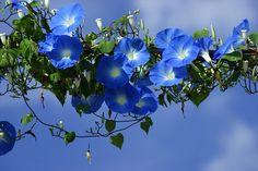 青空を渡る by nobuflickr, via Flickr
