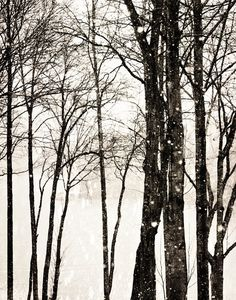 Snowy Day Fine Art Photography tree photo winter by kimfearheiley