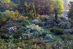 """Lungo il litorale laziale, 40 km a sud di Roma, ecco i romanantici e sorprendenti Giardini della Landriana: c′è la """"Valle delle rose antiche"""", dove i fiori crescono in aiuole orlate di lavanda, timo e garofani. C′è un viale di Rosa mutabilis e un altro viale di rose """"Bonica"""". E poi vecchi muri rivestiti di Rosa banksiae (foto Archivio Grandi Giardini Italiani)"""