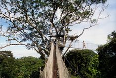 10 best things to climb  #1 was Tikal, check!   #7 Canopy Walkway, near Iquitos, Peru  Think this may be added to my bucket list.