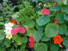 Pesquisa Formas de plantar um gramado. Vistas 172317.