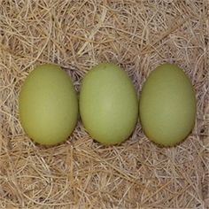 Olive Eggers from My Pet Chicken. Real green eggs!