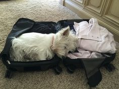 Baylee wanting to go with Mama on her trip