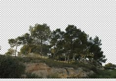 view from Spain by Gobotree, including Valenciana, Alicante, cutout plants, tree