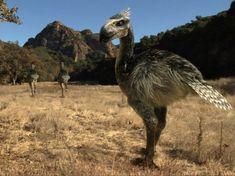 prehistoric terror birds - Google Search