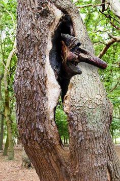 tree trunk faces | Funny Trees Lasse mich auch gerne WEITEREMPFEHLEN! DANKE! …bei Fragen bitte unter:   Mail: rikes1@live.de  oder Fon: 09366 9828281 oder 0160 930 700 41 anrufen – DANKE! https://www.facebook.com/Rikes.Lr.Partner