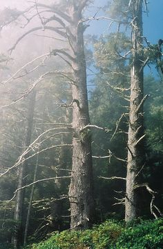 West Coast Trail - Misty Trees