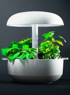 I love fresh salads and herbs - this would be ideal wedding gift! - just waiting for it to hit stores near me... Smart Gardens - plantui.com