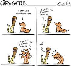 Cães e gatos – Chapéu do gato 3