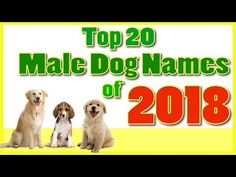 Top 20 popular Male Dog Names With Meanings ! Boy Dog Names - YouTube Popular Male Dog Names, Best Male Dog Names, Unique Female Dog Names, Cute Names For Dogs, Cool Names, Small Fluffy Dog Breeds, Big Fluffy Dogs, Boy Puppy Names, Beautiful Dog Names