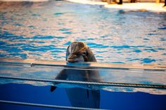In a bold move to protect the well\u002Dbeing of dolphins, India has moved to ban dolphin shows \u002D\u002D a push that helps elevate their status from creatures of mere curiosity to one that borders more closely to the personhood we seem to share.