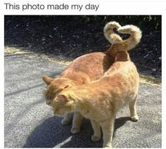 Funny Animal Memes of Day to Make You Smile - 16