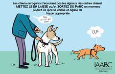 Votre chien est il arrogant2