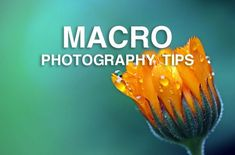Macro Photography Tutorials: Photography on a Small Scale | Nature TTL