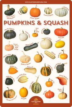 Squash and Pumpkin Identification Chart Fruit And Veg, Fruits And Veggies, Vegetables List, Pumpkin Recipes, Veggie Recipes, Squash Varieties, Pumpkin Varieties, Squash Types, Types Of Pumpkins